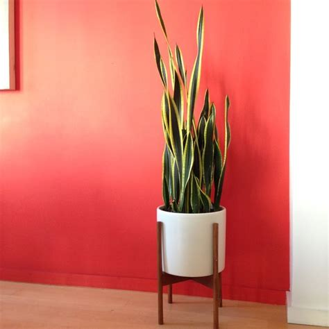 tall indoor plants low light 7 gorgeous mood boosting plants that can survive in your