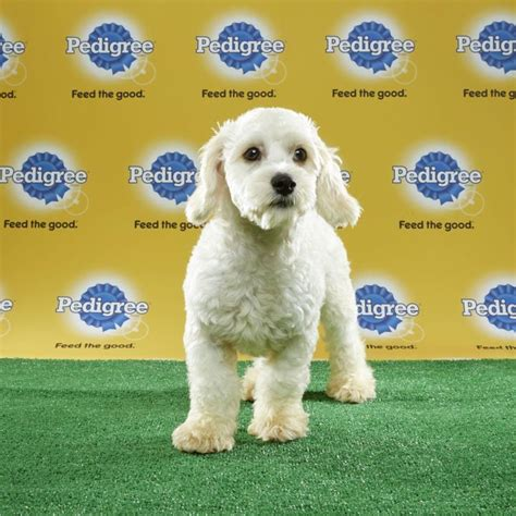 puppy bowl mvp 2017 mvp named in puppy bowl xiii ign