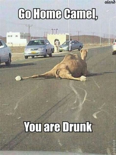 go home shark you are drunk funny shark meme