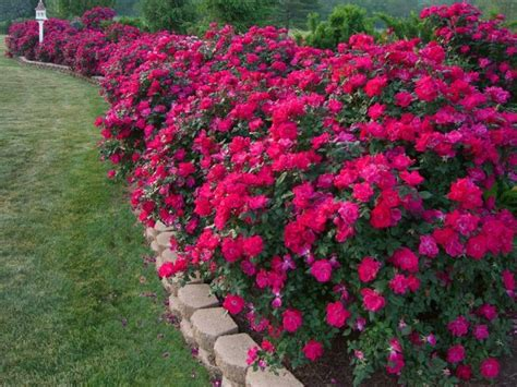 Borders For Flower Beds by Amazing Flower Bed Border Ideas Garden Outside