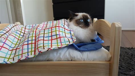 ikea cat bed ikea life hack a ragdoll cat bed youtube