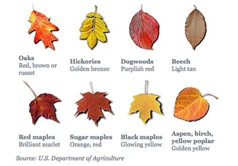 different color trees leaf chart preschool activities leaves