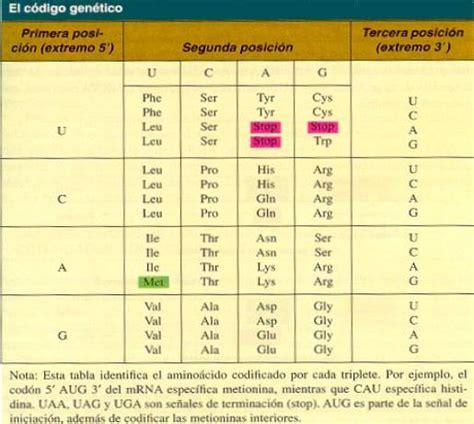 clave significado de clave diccionario codigo significado de codigo diccionario el c 243 digo gen