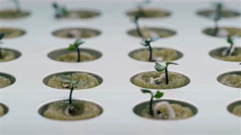 Ikea Hydroponics Garden | ikea launches indoor garden that can grow food all year