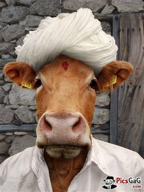 reincarnation blues a novel cow more animal pics http www picsgag