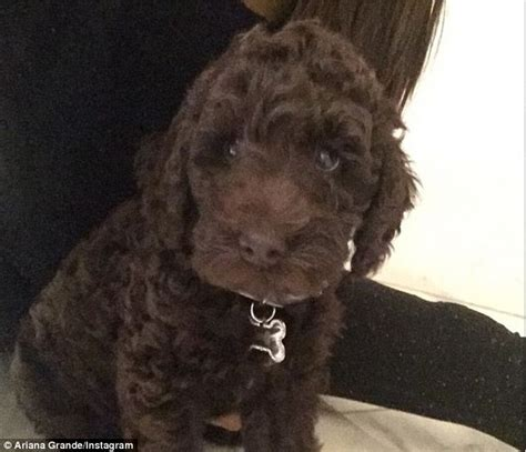 harry potter puppy grande shares photo of sixth and names him after harry potter s sirius