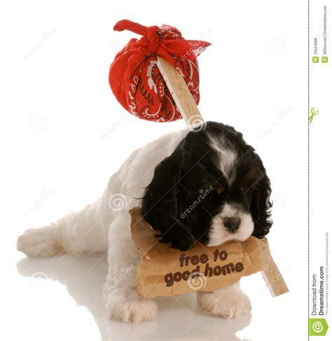free puppy royalty free stock image image 10524866