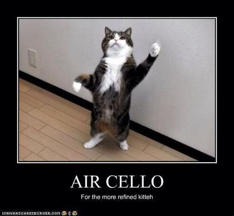 Cello Memes - 132 best i to play cello images on pinterest plays