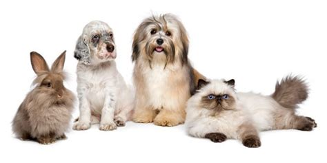 My Pet shield my pet pet insurance information news and reviews