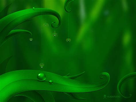 wallpaper in green colour green background images wallpapersafari