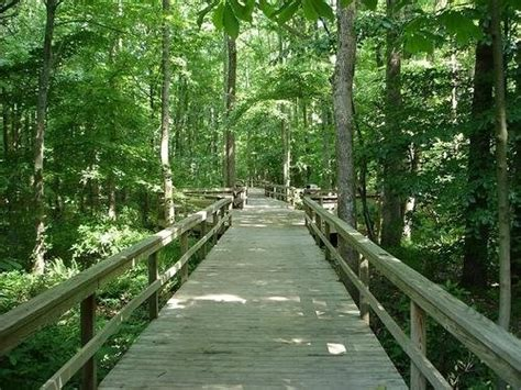Bog Garden Greensboro by Bog Gardens Greensboro Proud To Call Nc Home