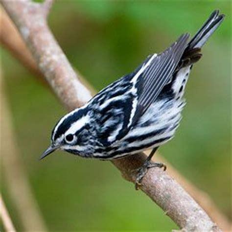 40 best images about backyard birds on pinterest