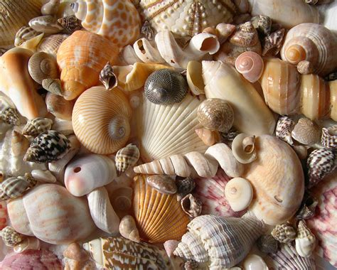 Marine Home Decor by Hawaii Underwater Photography Site Seashells By Millhill