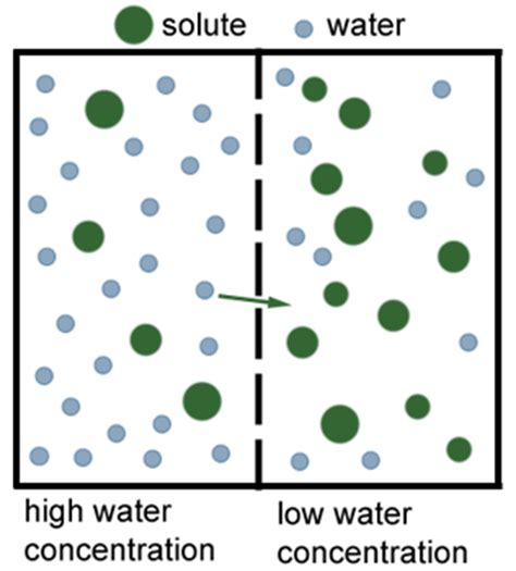 osmosis diagram osmosis scienceaid