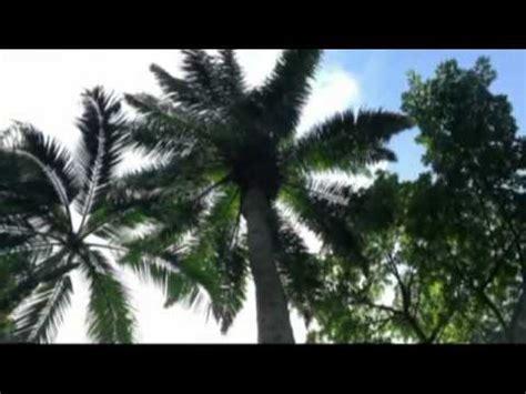 victoria botanical gardens mont fleuri mahe, seychelles