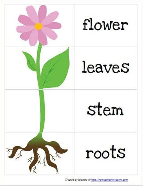 Plant Parts Worksheet by Parts Of A Plant Worksheet Ljskool