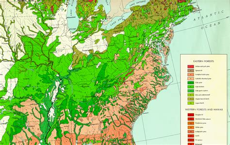 map us forests forest areas of the united states