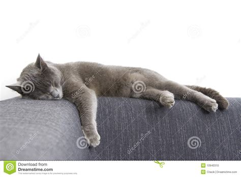 cat on a couch gray cat on a sofa stock photo image 10940310