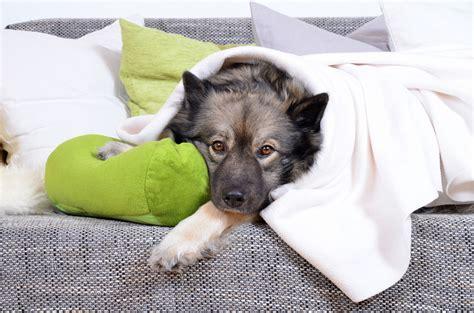 Metindol Vaistai veterinarijos gydytoja 緇moni絣 vaistai gyv絆nams gali