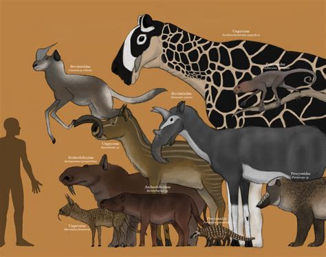 new year animals future the future is far from procyonids to herbocans by