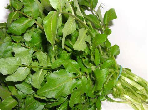 crescione in cucina crescione d acqua erba aromatica uso in cucina e