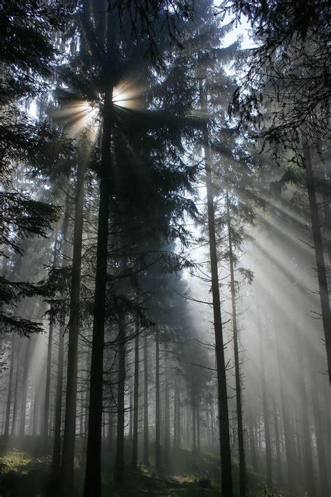 kostenlose foto baum natur wald ast licht stra 223 e sonnenlicht blatt blume gr 252 n kurve kostenlose foto baum natur wald ast winter licht nebel sonnenlicht morgen blatt