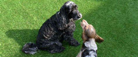 artificial grass for dogs artificial grass suppliers and installers bexley kent grass