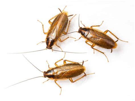 Kill Termites Boric Acid