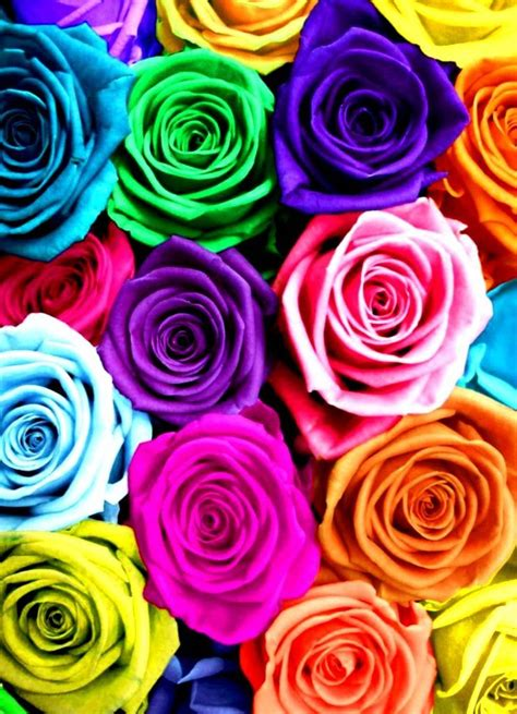 colorful roses rainbow roses color color splash quot c quot