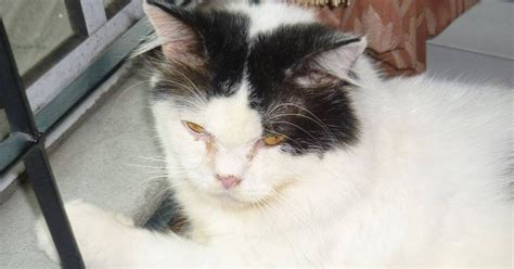 Vitamin Kucing kucing utara perlukah vitamin d kepada kucing