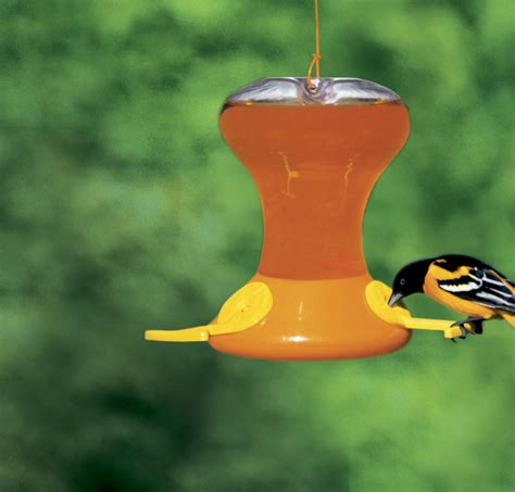 oriole birds acceptance large selection of oriole feeders