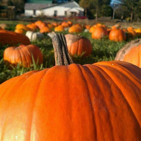 pumpkin patches pumpkin patch fall