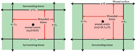 the 2d plan view schematic of 2d wound domains left plan view of a
