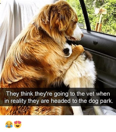 going to the dogs they think they re going to the vet when in reality they are headed to the park
