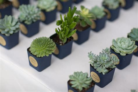 mini plants mini plant pot wrappers by popular demand and whatnot