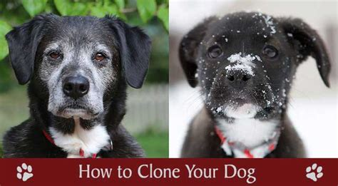 clone your how to clone your chasing tales