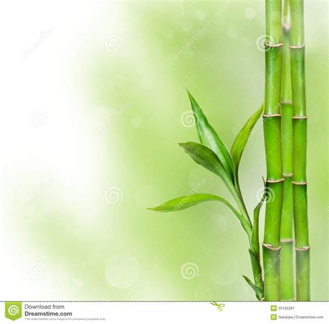 Zen Design Concept by Green Background With Bamboo Stock Image Image 33165281