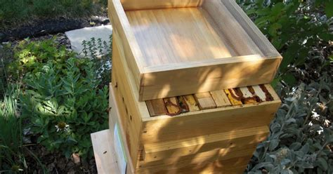 backyard bee hive pyramids checkerboards ladders