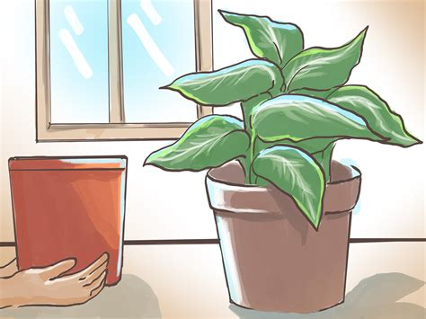 how to revive a plant how to revive malnourished house plants 7 steps with