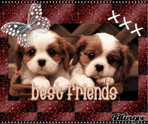best friend puppies best friend puppies picture 102709990 blingee