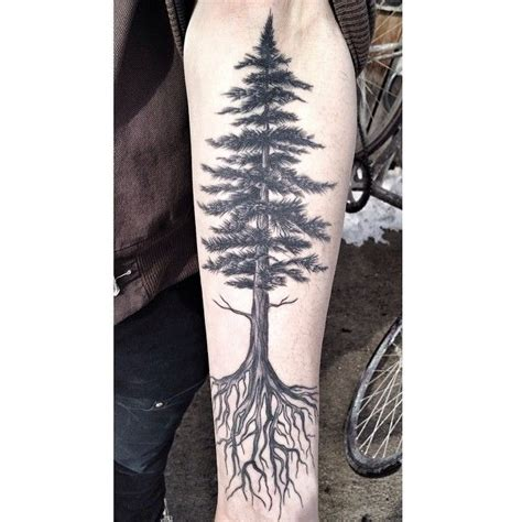 redwood tree tattoo 25 best ideas about redwood on tree