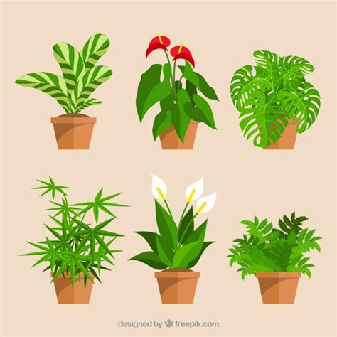 Set Flower set of decorative flower pots and flowers vector free