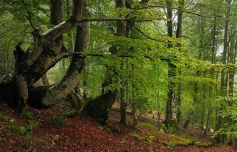 imagenes de bosques verdes verdes del saja imagen foto paisajes bosques