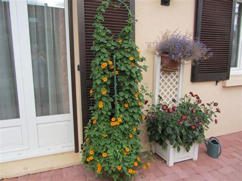 Plante Grimpante Pousse Rapide by Plante Grimpante Rapide Maison Design Apsip