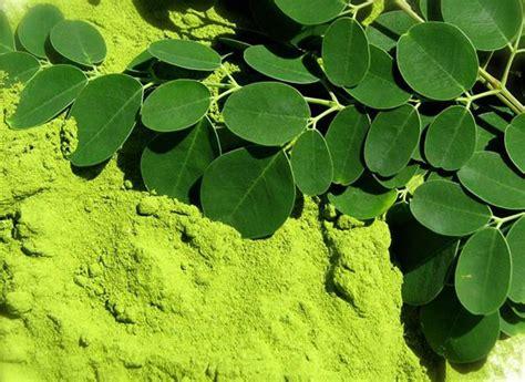 Bubuk Biji Pala Asli Tanpa Curan Alami jual serbuk daun kelor tepung daun kelor organik grosir