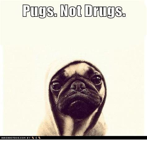 pugs no drugs 25 best memes about pugs not drugs pugs not drugs memes