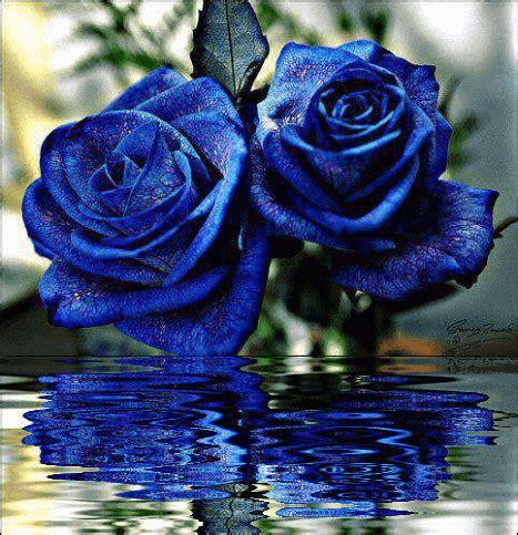 imagenes hd feliz noche con rosas azules imagen f 225 cil descargar imagenes de rosas azules hd gratis