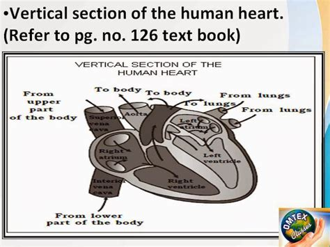 vertical section of human dna heart diagram in marathi choice image how to guide and