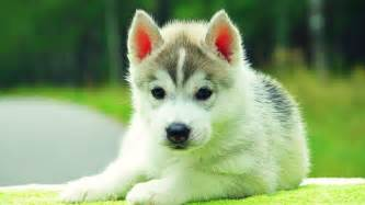 Cute Dogs Wallpapers cute dogs and puppies wallpapers wallpaper cave