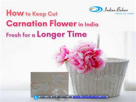 how to keep cut carnation flower in india fresh for a